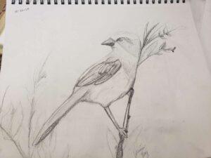 """""""Bird Drawing""""./ Courtesy • Jasmin Ruiz"""